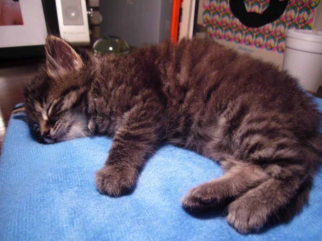 Kitten A