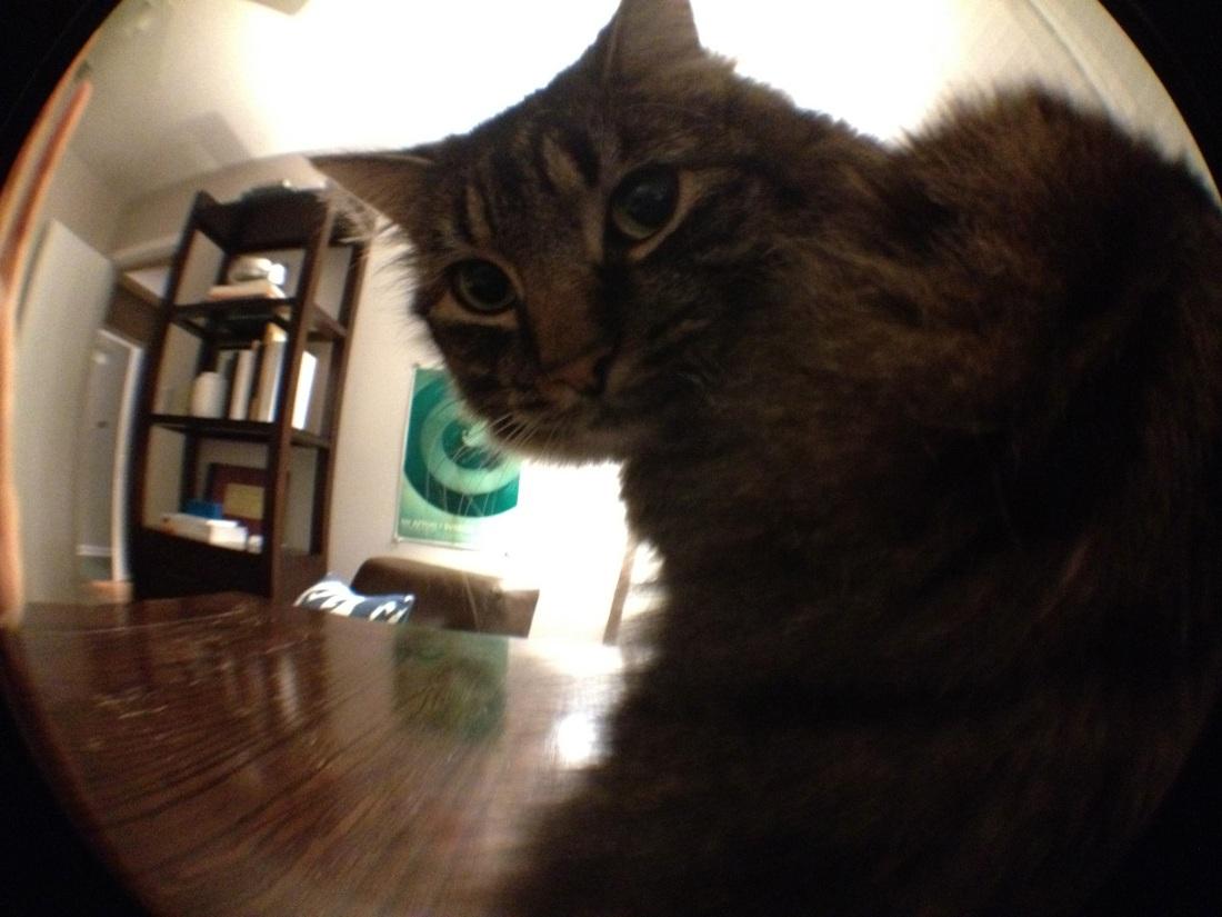 Kitten meets Olloclip