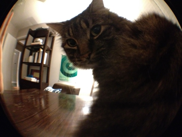 Kitten meets Olloclip