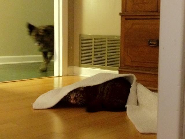 Surreptitious Kitten