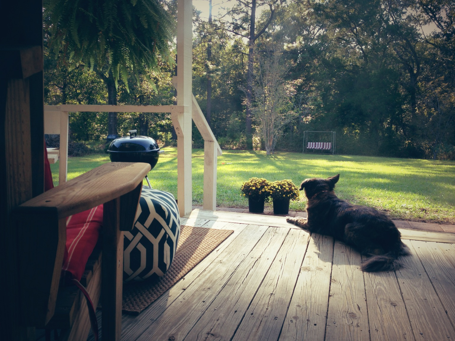 Maggie the dog lounging on a comfortable back porch as afternoon light peeks through the trees.