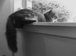Kitten on a ledge