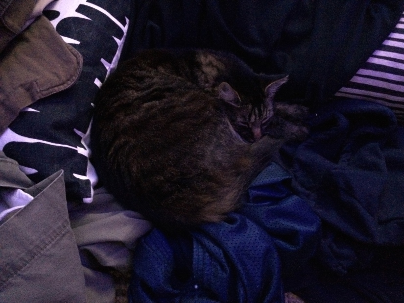 I leave my laundry on the floor for Kitten.